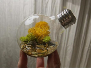 lightbulb ecosystem