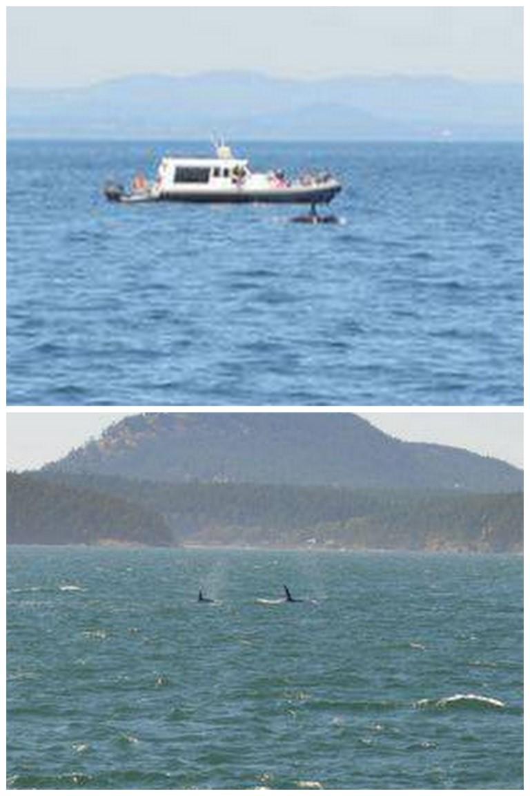 San Juan Whale Watching Cruise