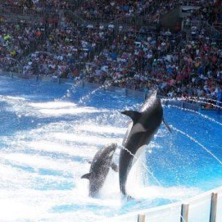 Places to Visit in Florida: SeaWorld Orlando
