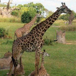Family Adventure at Animal Kingdom – Disney World Orlando