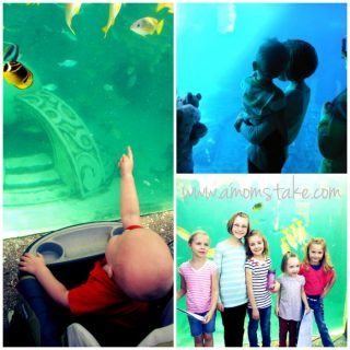 Fun for the whole family: SeaWorld San Diego