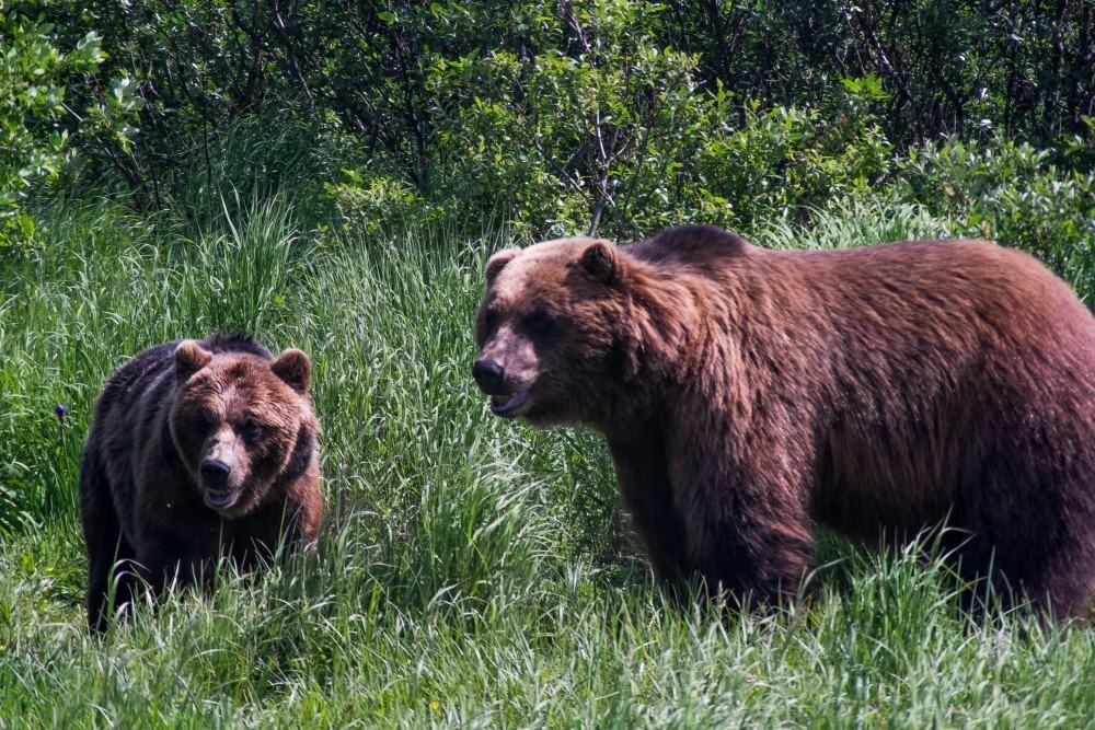 Alaska A Mom's Take 2-1