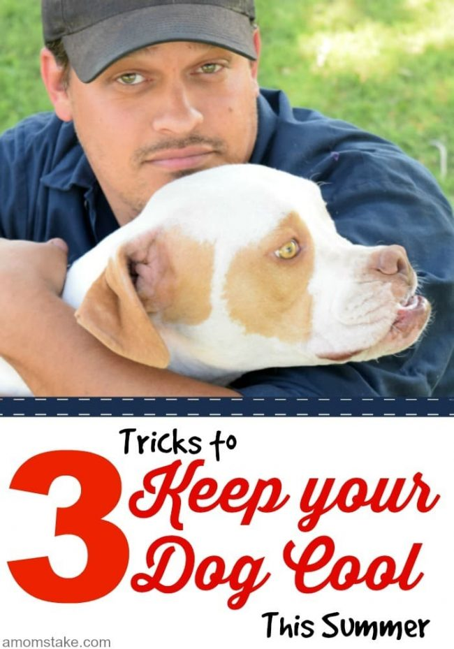 Keep your dog cool this summer with these 3 easy tips to keep your dog cool and a bonus fun recipe.
