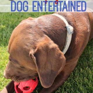 6 Ways to Keep Your Dog Entertained