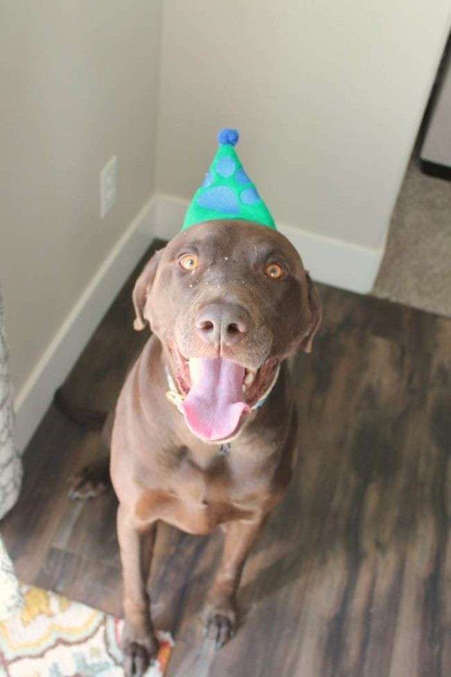 celebrate-your-dog